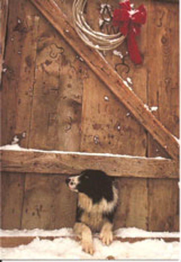Your side of the Fence Border Collie Christmas Card