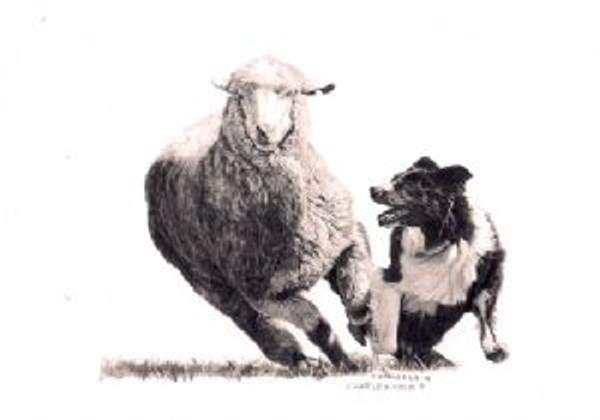 Sheep & Shep Print by Cheryl Harley-Volzt