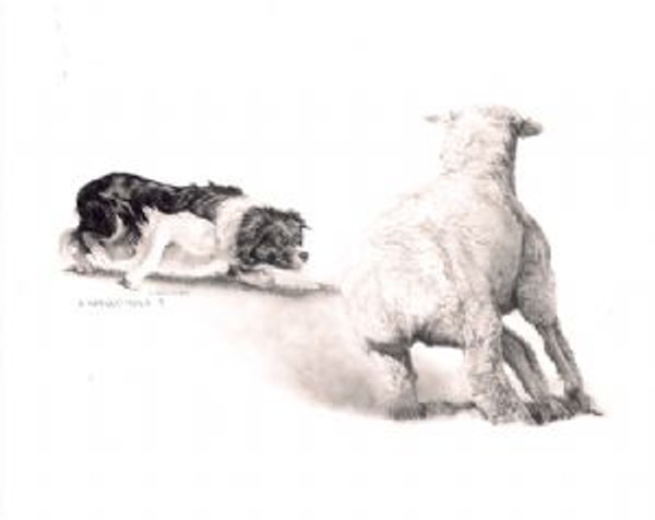 Ewe Turn Print by Cheryl Harley-Volzt