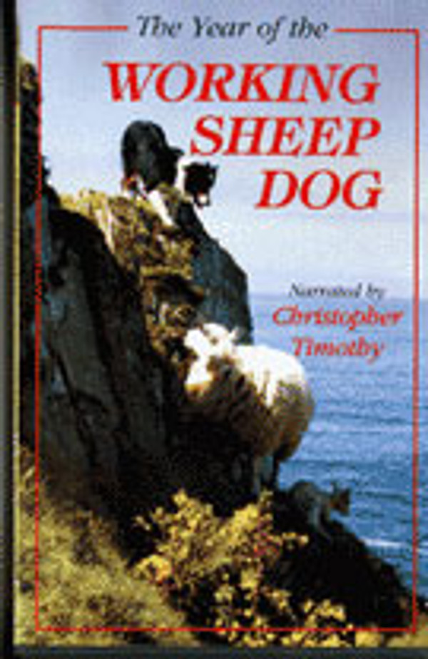 The Year of the Working Sheepdog