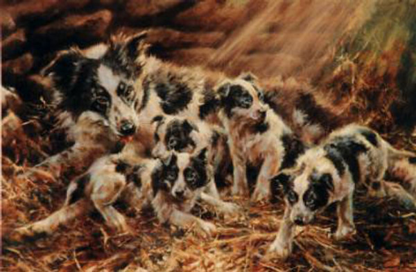 The Border Family with Pups Print, Limited Edition, by Mick Cawston