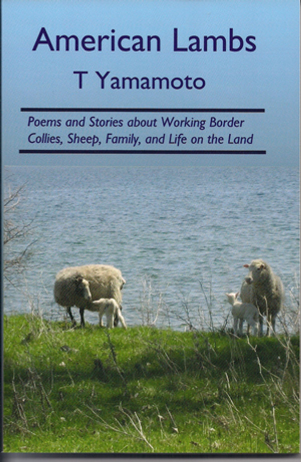 American Lambs by T. Yamamoto