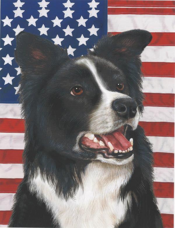 Border Collie USA Flag