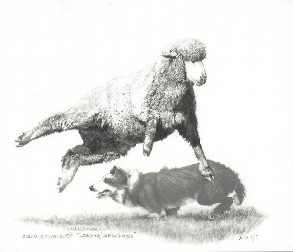 Leaping Lambchop - by Cheryl Volzt