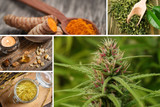 5 Plants for Reducing Inflammation