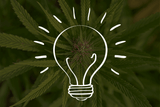 10 Interesting Facts About Cannabinoids