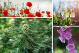 4 Discoveries of Plant Based Medicines