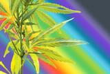 What Does Full-Spectrum CBD Mean?