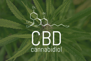 CBD Extraction: Which Method is Best?