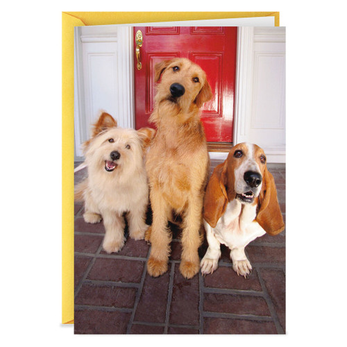 Dogs at the Door Stay Out Late Funny Birthday Card