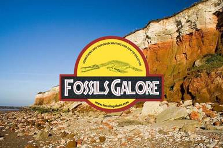 Fossil Hunting Tool Pack Hire