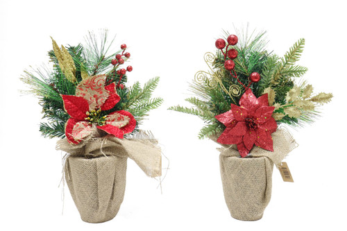 POINSETTIA PINES IN POT 43cm Choice of 2 Styles