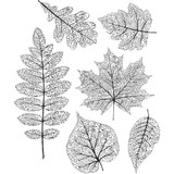 """Pressed Foliage - Tim Holtz Cling Stamps 7""""X8.5"""""""