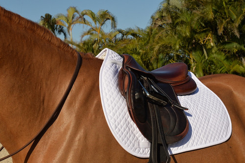 Equifit Essential Square Pad on Horse