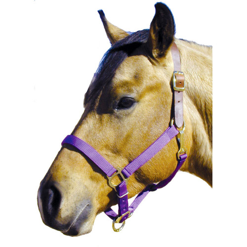 Nylon Breakaway Halter with Leather Crown - Purple