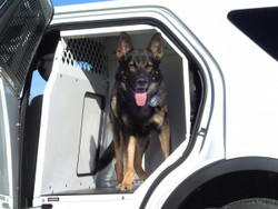 Havis K9-F18-PT Dog K9 Kennel Box and Prisoner Transport System, Ford Law Enforcement Interceptor SUV Utility 2013-2019, Choose Black or White, K9 Space on Driver's Side, Prisoner Space on Passenger's Side