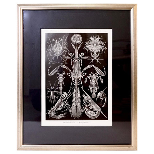 Art Forms of Nature by Ernst Haeckel, Thorocostraca