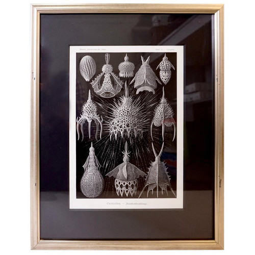Art Forms of Nature by Ernst Haeckel, Cyrtoidea
