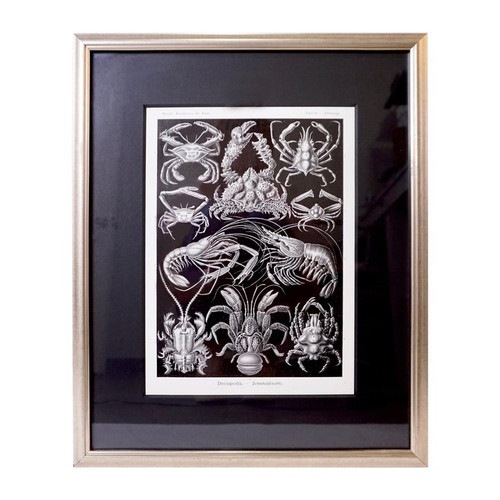 Art Forms of Nature by Ernst Haeckel, Decapoda