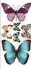 Butterfly Transfer  Small Rub On Furniture Transfer  with FREE Shipping