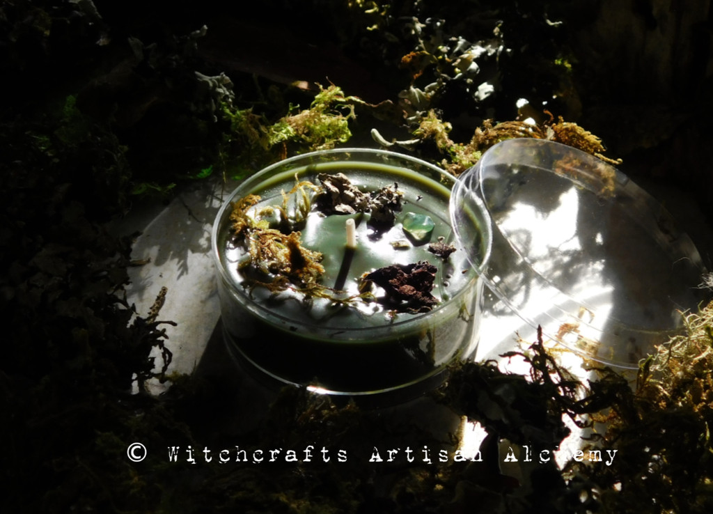 DARK FOREST Coco Apricot Paraffin Luxury Wax Blend Mossy Green Jumbo Artisan Tealight Candle w/ Protective Cover