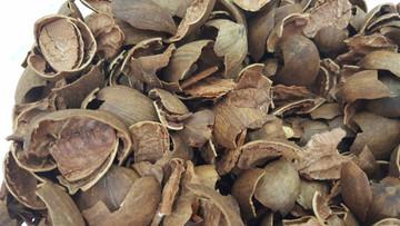 BBQ Pecan Shell
