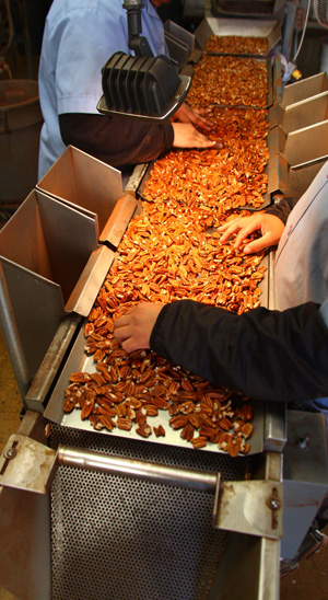 workers in pecan facility hand processing custom shelling order