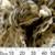 60mm Light Leopard Spot Fabric Flower