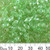 Transparent Pale Green Long Magatama Beads