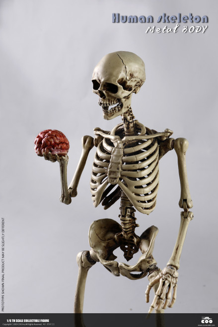 [CM-BS011] 1:6 The Human Skeleton Diecast Alloy by COO Model