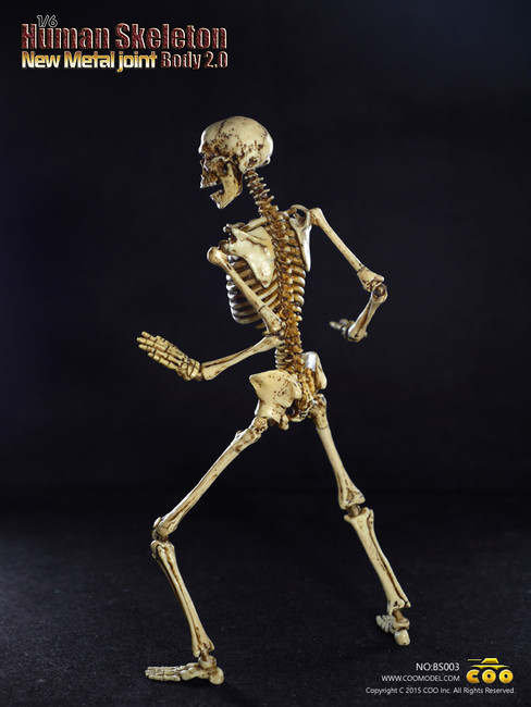 [CM-BS003] COO Model Human Skeleton Body 2.0 Features New Metal Joint
