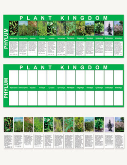 Plant Kingdom Charts - sku BE.03 - 1