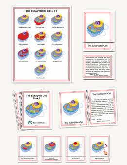 Eukaryotic Cell - sku BE.55 - 1