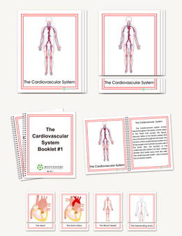 The Cardiovascular System, Early Childhood - sku BP.92 - 1