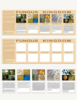 The Fungus Kingdom Charts - sku BE.04 - 1