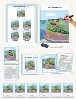 Biogeochemical Cycles, The  Calcium Cycle - sku CE.26 - 1