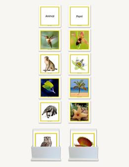 Concept Development Animal - Plant - sku LAP.87 - 1