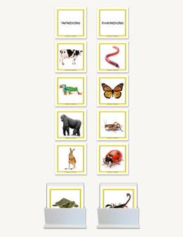 Concept Development Vertebrates - Invertebrates - sku LAP.89 - 1