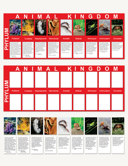 Animal Kingdom Charts - sku BE.02 - 1
