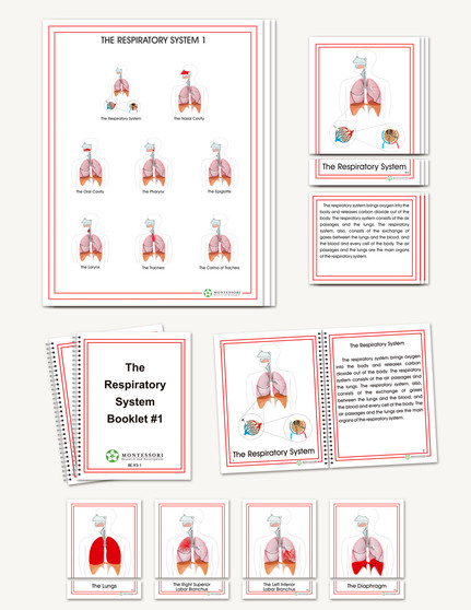 The Respiratory System, Elementary - sku BE.93 - 1