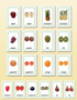 Picture Card Matching- Whole & Half Fruit - sku LAP.19 - 1