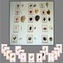 Seashell Matching - Combination - sku LAP.15C - 1