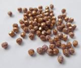 Firepolish 4mm Alabaster Lilac Gold Luster (100 beads) Czech Glass