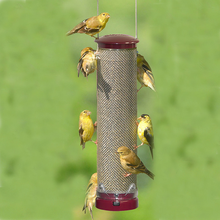 Quick Clean Nyjer Screen Feeder - Berry