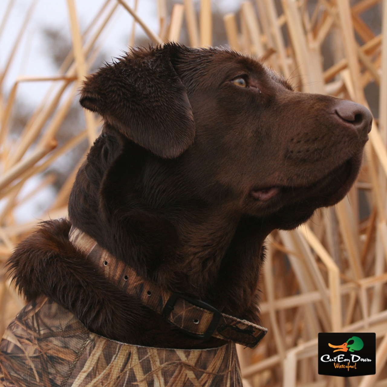 NEW AVERY SPORTING DOG GREENHEAD GEAR GHG QUICK SET TRAVEL DOG KENNEL