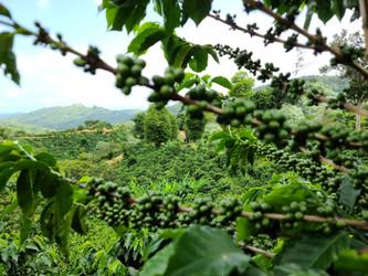 Hacienda Caracolillo - Coffee Farm Spotlight