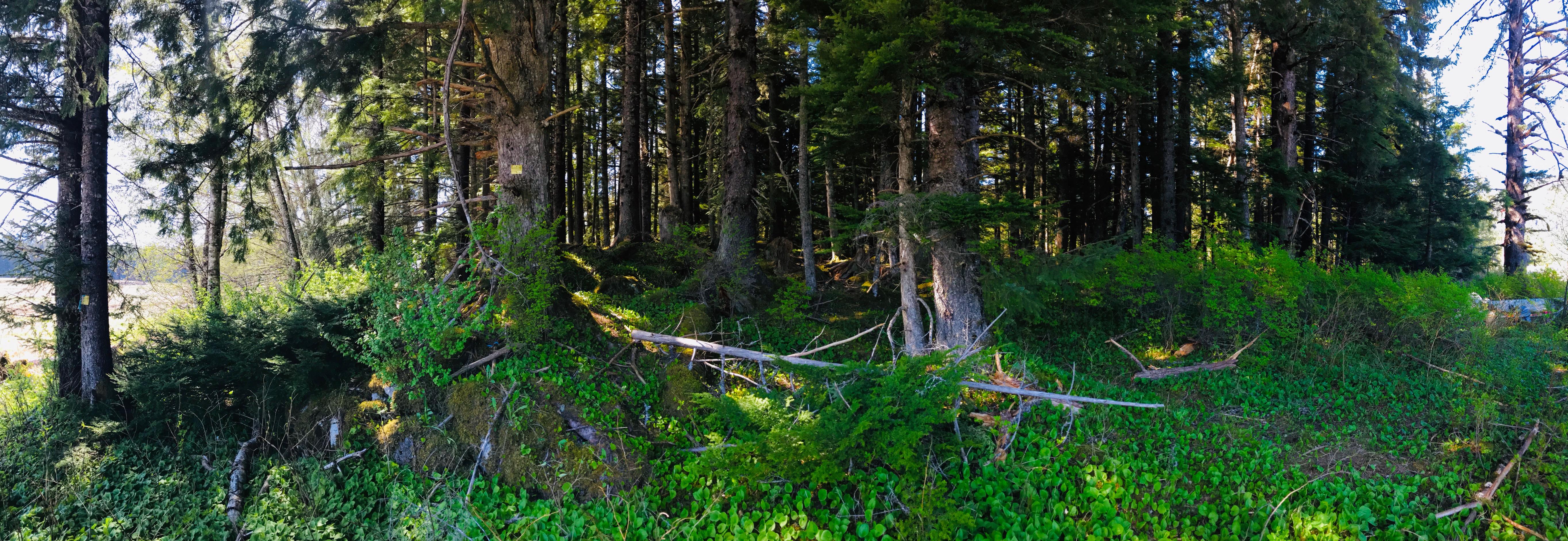 pano-of-woods.jpg