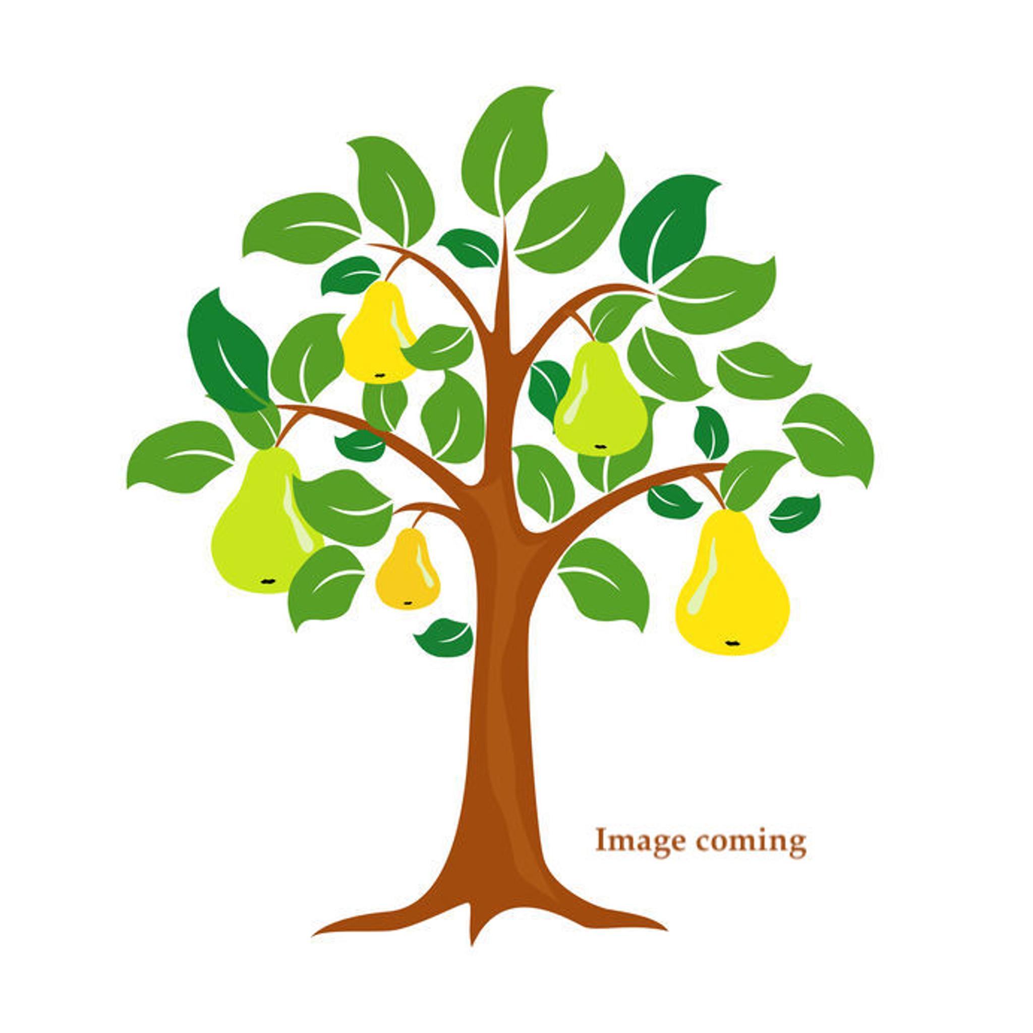 Baptiste Valette Pear - Heritage Fruit Trees