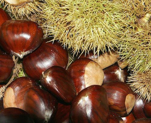 April Gold Chestnut