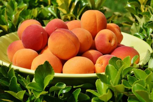 Bulida Apricot (dwarf)